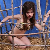 Young Gusel Wild Animal Picture Set