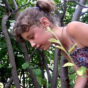 Steppe Flower HD Video 314