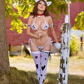 Darshelle Stevens Cow Picture Set