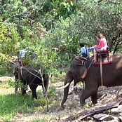 Cinderella Story Cinderella Girl Walk With An Elephant Video 002 250421 mp4